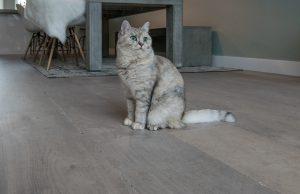 Huisdier houten vloer Joure